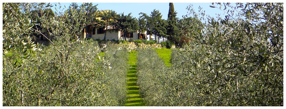 AgriRistoro - Podere Sant'Andrea